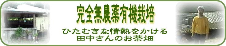鹿児島県産田中園の有機無農薬のお茶